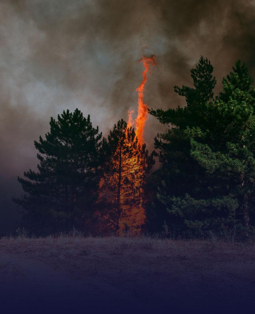b-Wildfire-Buildingmetrix