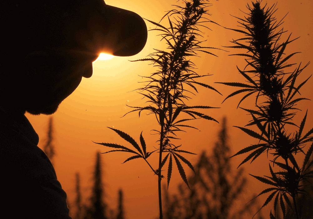 cs-cannabis-risk